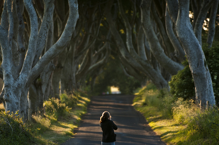Dark-Hedges05 (700x464, 187Kb)