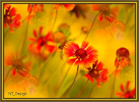 Картинки схематические осенних цветов