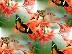 Превью бабочка (700x525, 75Kb)