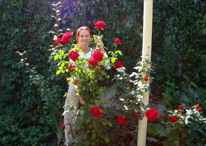 Некоторые из роз в моем уральском саду
