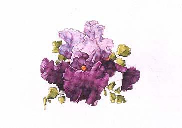 схема для вышивки крестом Пурпурный ирис.