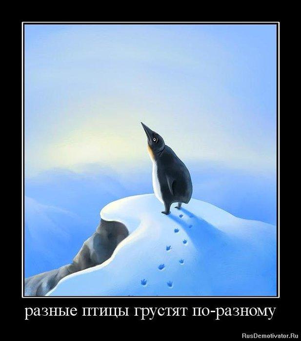 1283872545_823657_raznyie-ptitsyi-grustyat-po-raznomu (617x700, 40Kb)
