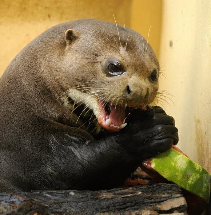 смешные животные фото 1 (686x700, 165Kb)