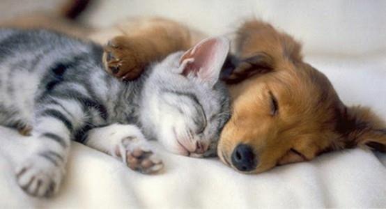кот и собака (554x300, 48Kb)