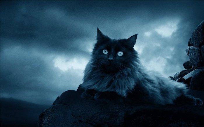 коты воры (699x437, 38Kb)