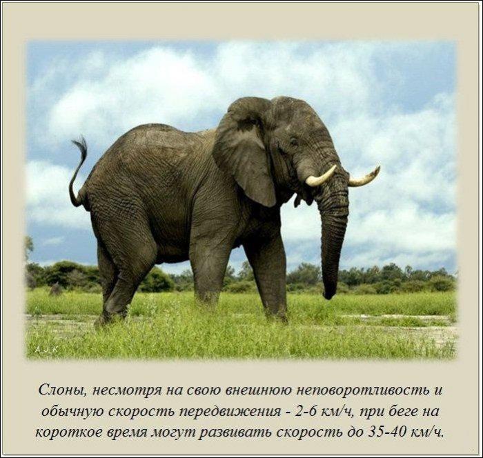 interesnye_fakty_20_foto_3 (700x664, 88Kb)