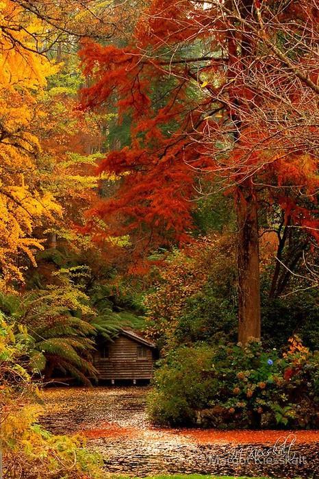осень,стихи о осени,картинки осень (466x700, 185Kb)