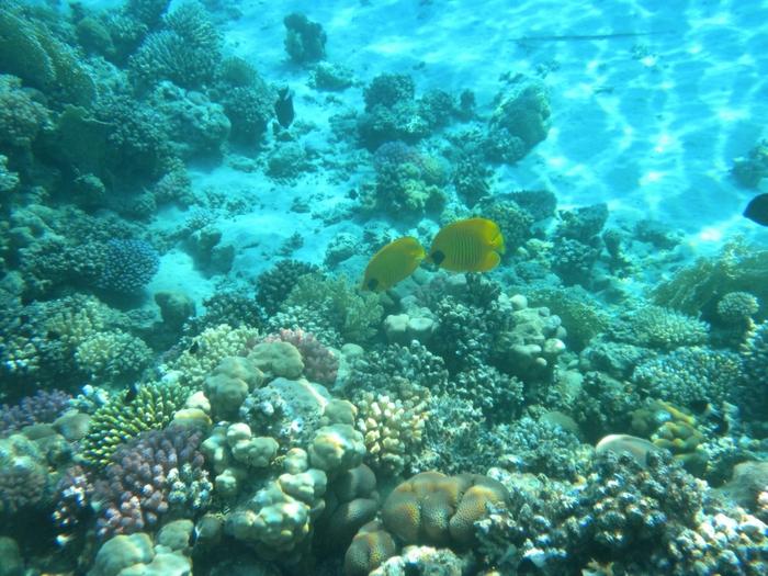 Кораллы древнейшие существа на земле