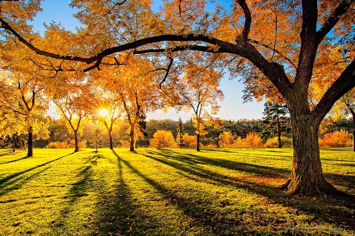 Золотая осень (700x465, 276Kb)