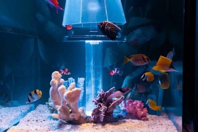 аквариум в интерьере 3 (680x454, 95Kb)