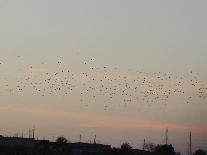 стая птиц перелетает куда то.