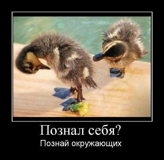 1249287424_hiop.ru_demotivator-250 (640x625, 62Kb)