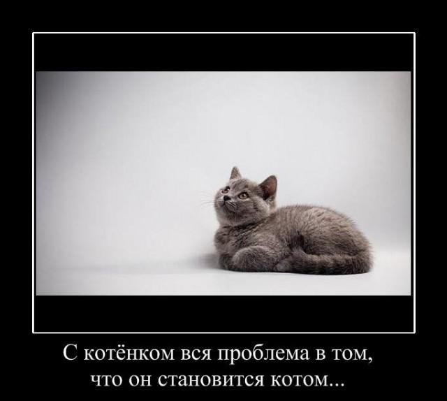 1249287457_hiop.ru_demotivator-100 (640x574, 42Kb)