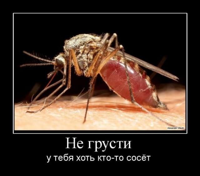 1249287474_hiop.ru_demotivator-410 (640x564, 57Kb)