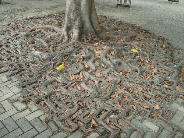 дерево (604x453, 102Kb)