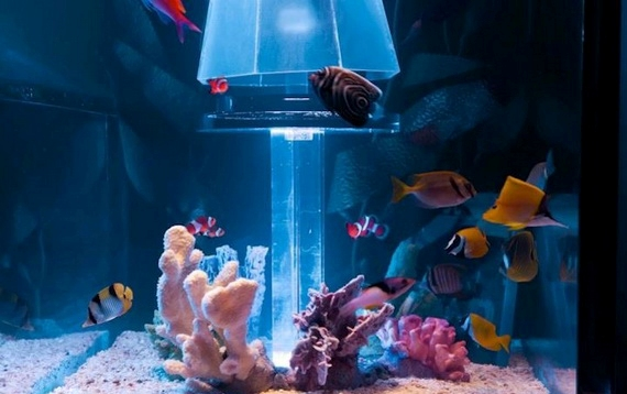 аквариум над головой4 (570x358, 113Kb)