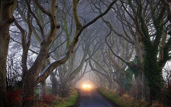 Древесный туннель в Ирландии3 (570x357, 190Kb)