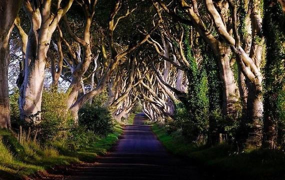 Древесный туннель в Ирландии5 (570x361, 217Kb)