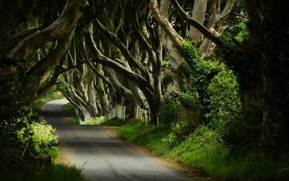 Древесный туннель в Ирландии10 (570x357, 155Kb)