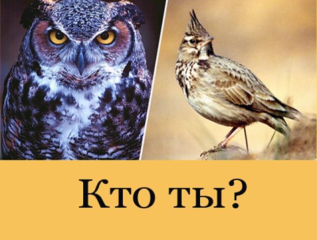 4497432_sovi (640x485, 98Kb)