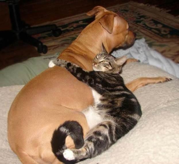 кошка и собака 5 (623x568, 37Kb)