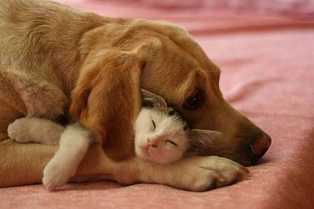 кошка и собака 7 (625x417, 29Kb)