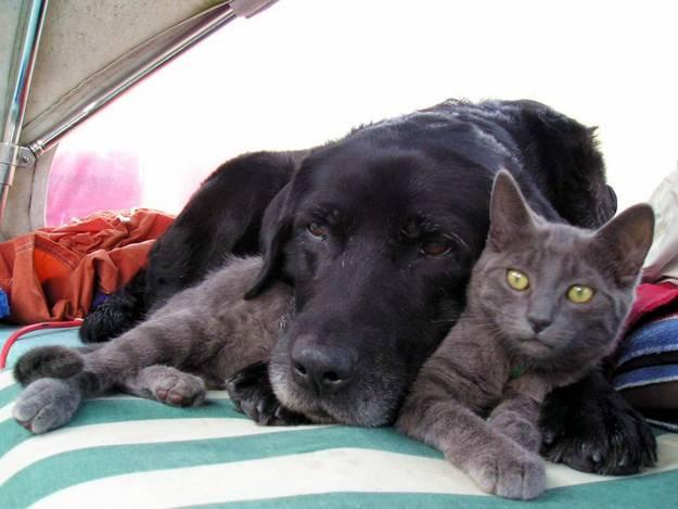 кошка и собакаи 9 (625x469, 37Kb)