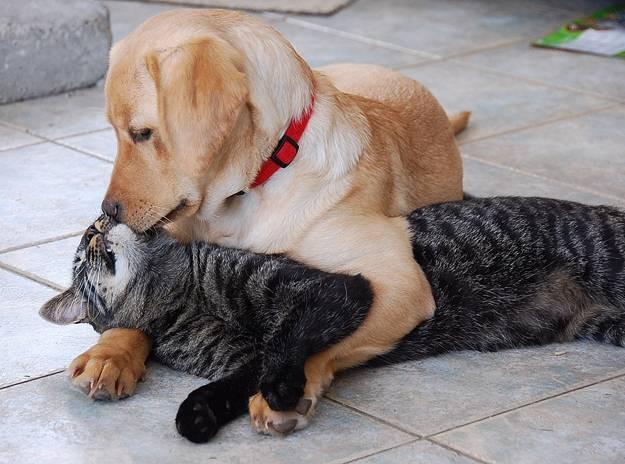 кошка и собака 11 (625x464, 49Kb)