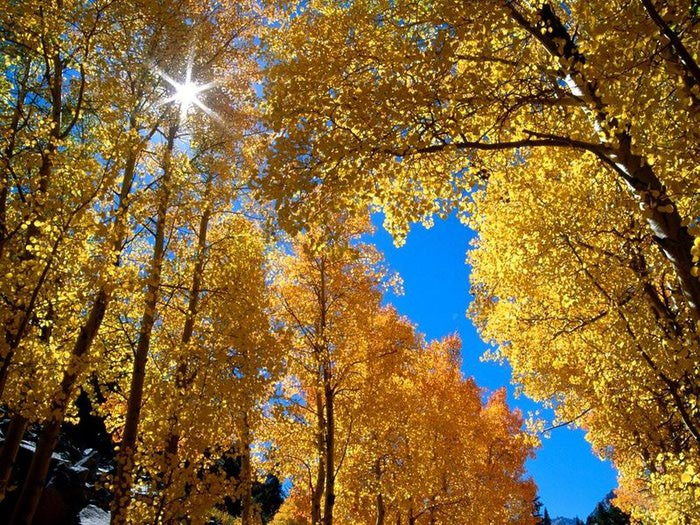 22f60ca97b8e218ccbcef777b9fe9019_Autumnal_Colors_Free_Screensaver (700x525, 161Kb)