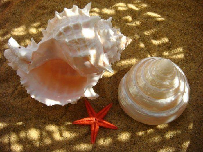 Каждый отдыхающий на море привозит с курорта домой разнообразные морские сувениры.  Чаще всего это - ракушки...
