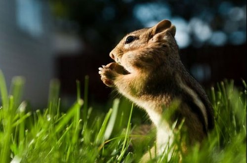 1280764914_1280518221_cute_squirrels_21 (500x331, 30Kb)