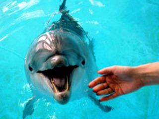 Дельфинарий в Сочи (320x240, 24Kb)