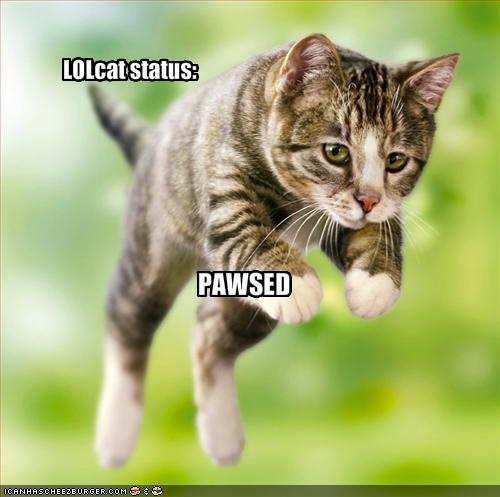 funny-pictures-this-lolcat-is-paused (500x497, 32Kb)