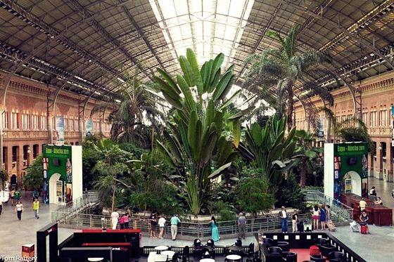 botanic (1) (560x373, 74Kb)
