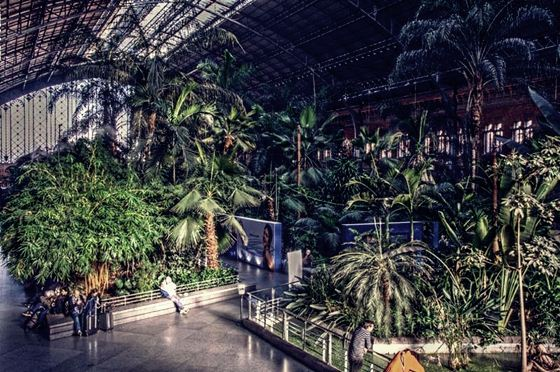 botanic (3) (560x372, 76Kb)