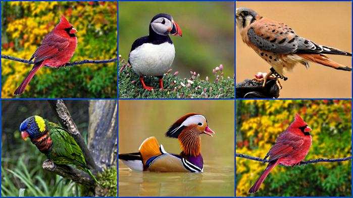 Птицы (700x393, 482Kb)