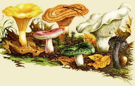 Первый способ: в расчёте на 1 кг грибов в эмалированную кастрюлю нужно налить 1/3стакана воды, 2/3стакана 8...