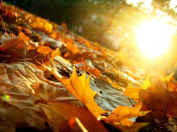 Autumn_Leaves_by_artifexa (700x525, 69Kb)