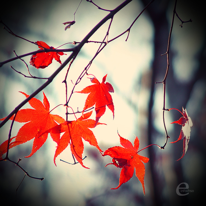 it__s_autumn__by_einfachso (500x500, 505Kb)