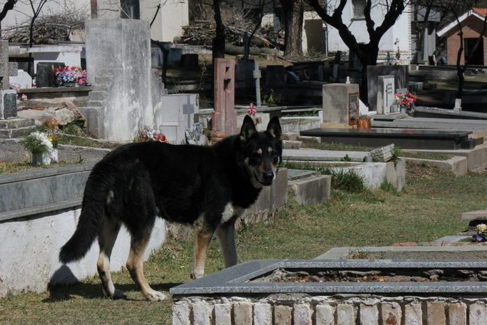 собачья верность 1 (700x466, 85Kb)