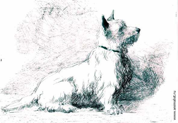 графика собака: