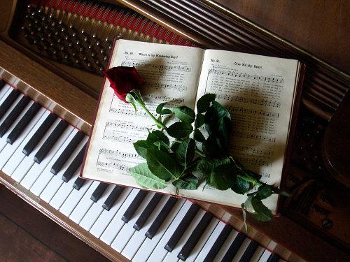 клавиши и роза (500x375, 66Kb)