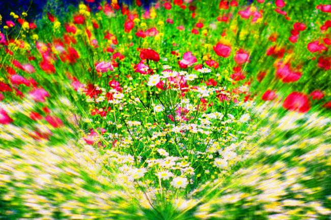 Радуга цветов и цвета взять код фото