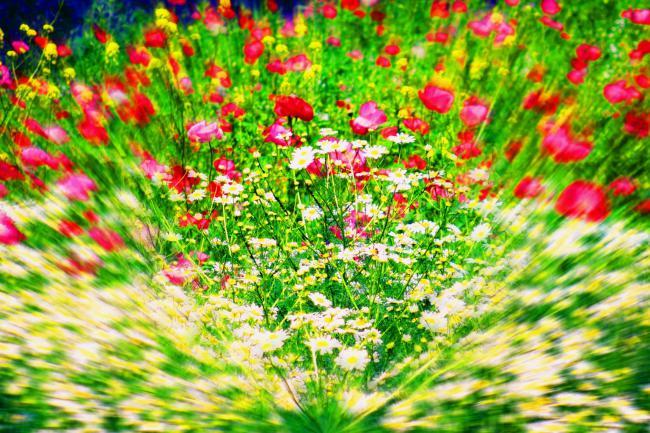 raduga-cvetov-i-cveta (650x433, 77Kb)