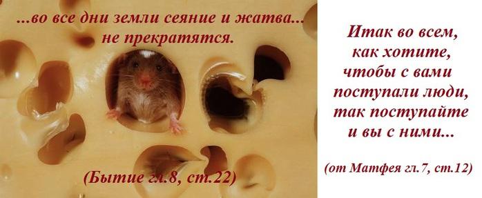 zhivotnie_49_20110411_117010124512 (700x287, 66Kb)