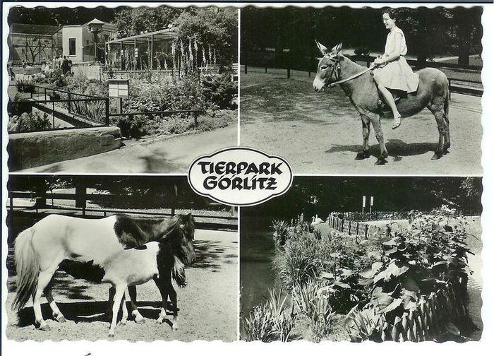 Одинокий Панда по имени Кельсонг. 19021