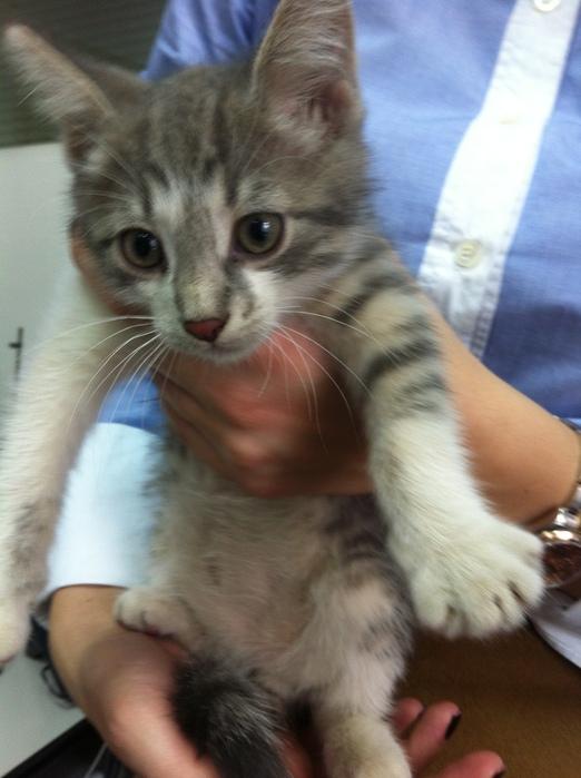 cat 002 (522x700, 121Kb)