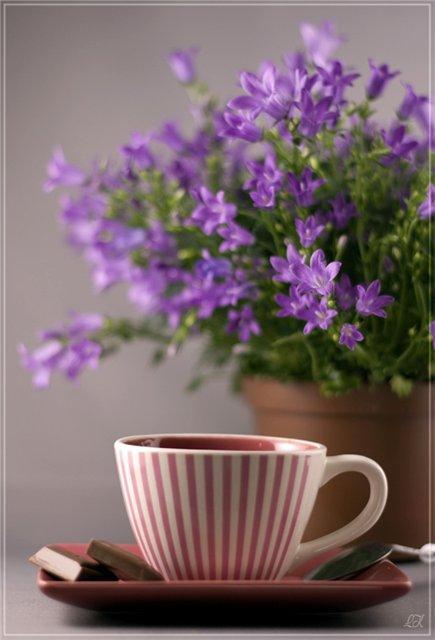 картинки кофе и цветы: