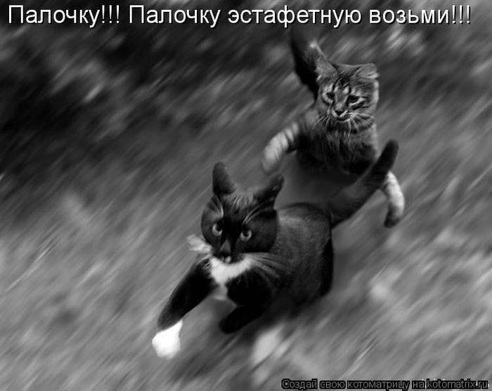 kotomatritsa_s- (700x557, 40Kb)