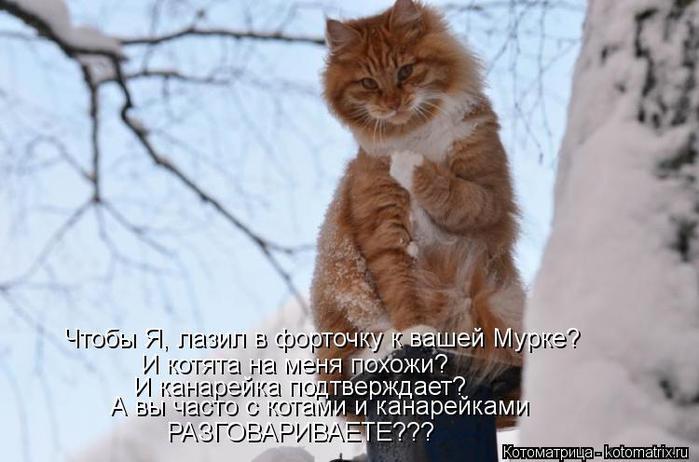 kotomatritsa_5K (700x462, 46Kb)